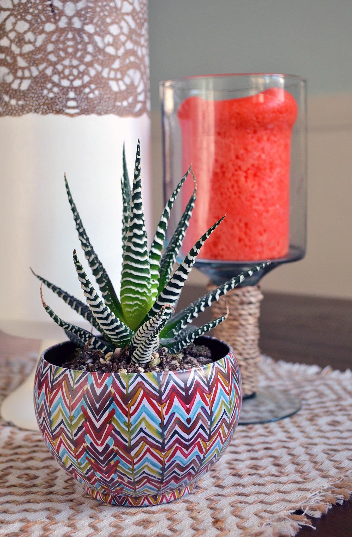 succulent_1